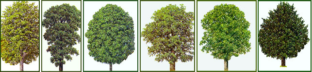 Wood You Like::The Woods we use